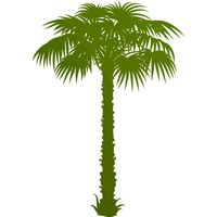 Palm Tree 01 Thumbnail