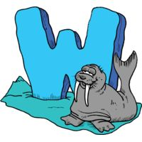 W is for Walrus Thumbnail