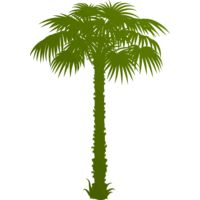 Palm tree 1 Thumbnail